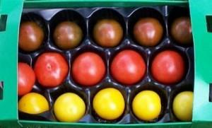 WM-Tomaten